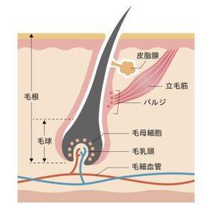 barujiryouiki